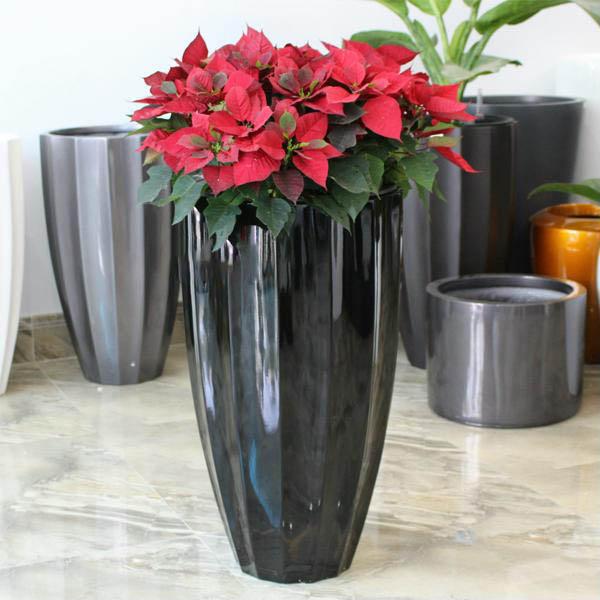 Chậu hoa composite đa giác cao thuôn